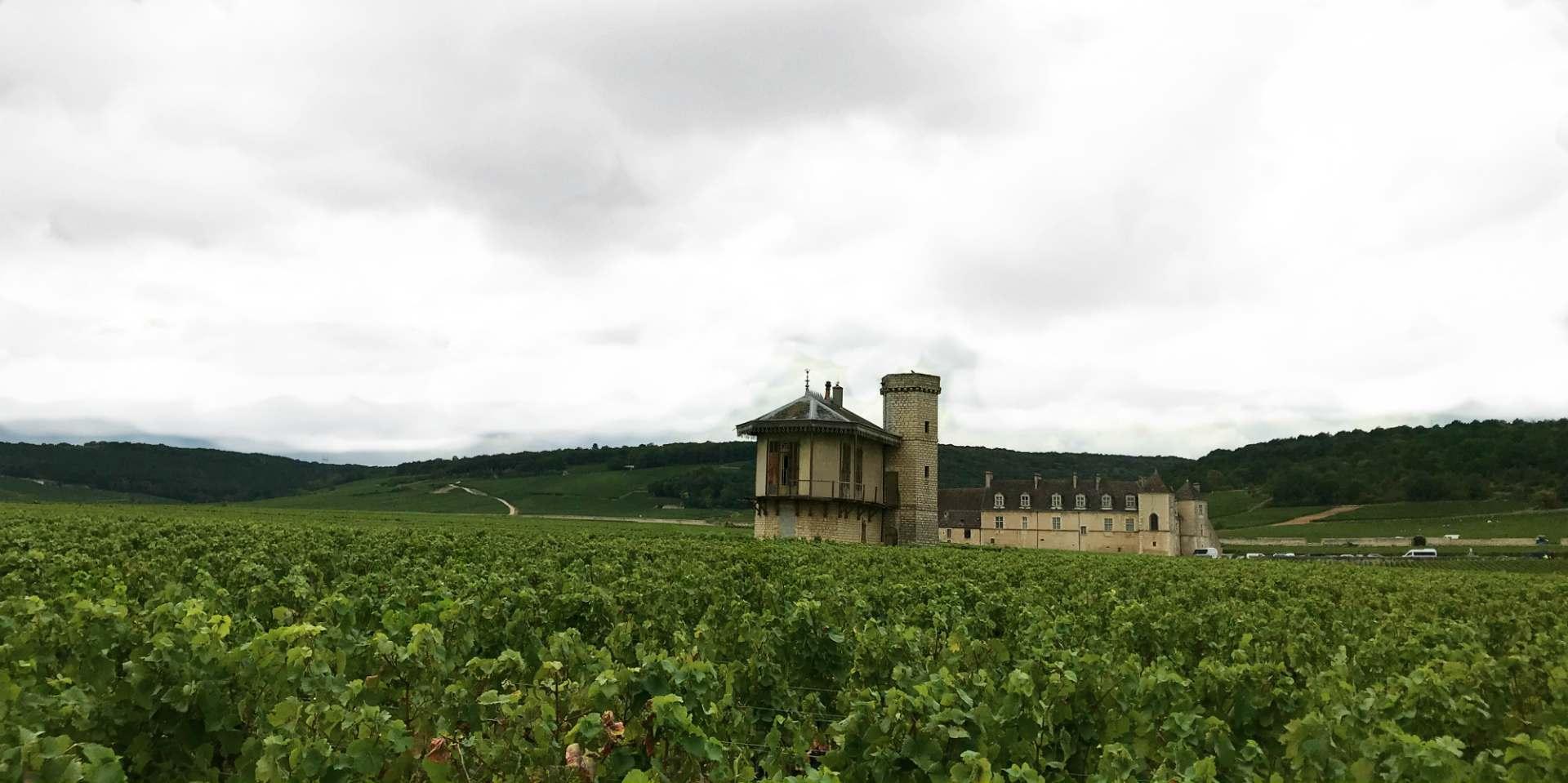 Château de la Tour, Clos de Vougeot