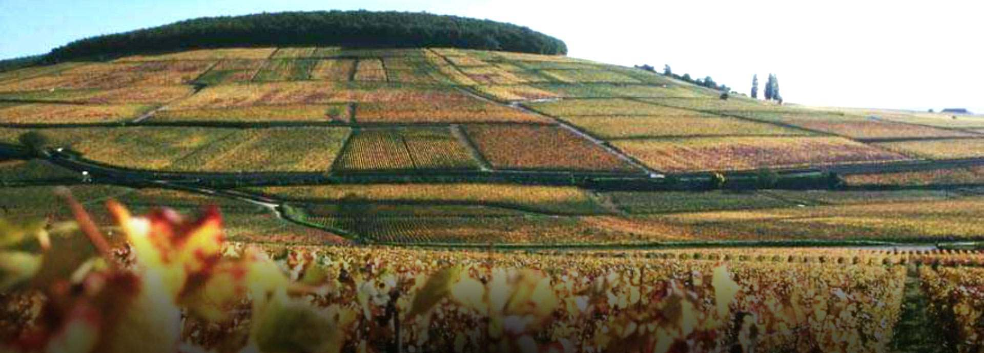 Domaine Bonneau du Martray banner image
