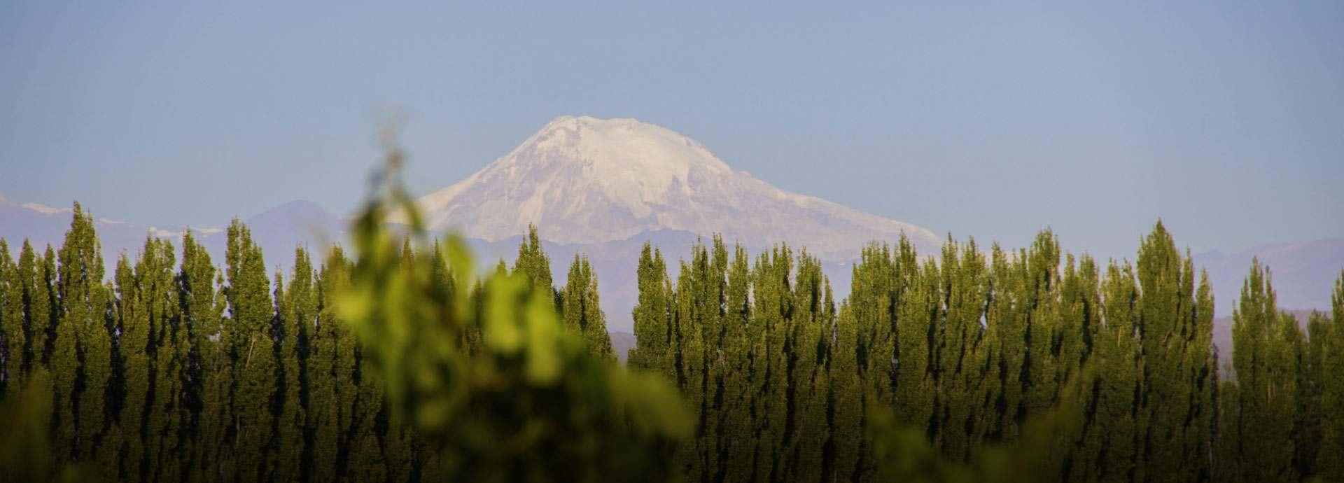 Mendoza Vineyards banner image