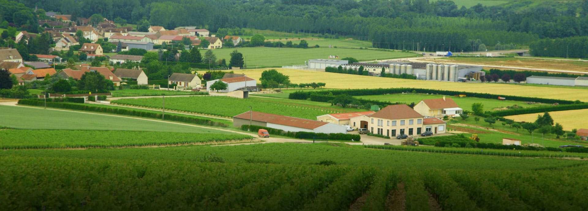 Domaine Vincent Dampt banner image