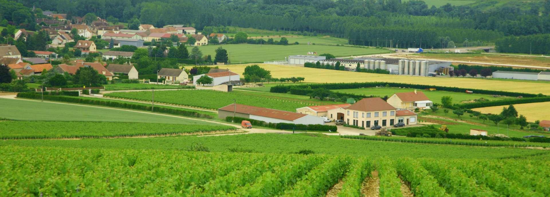 Domaine Vincent Dampt