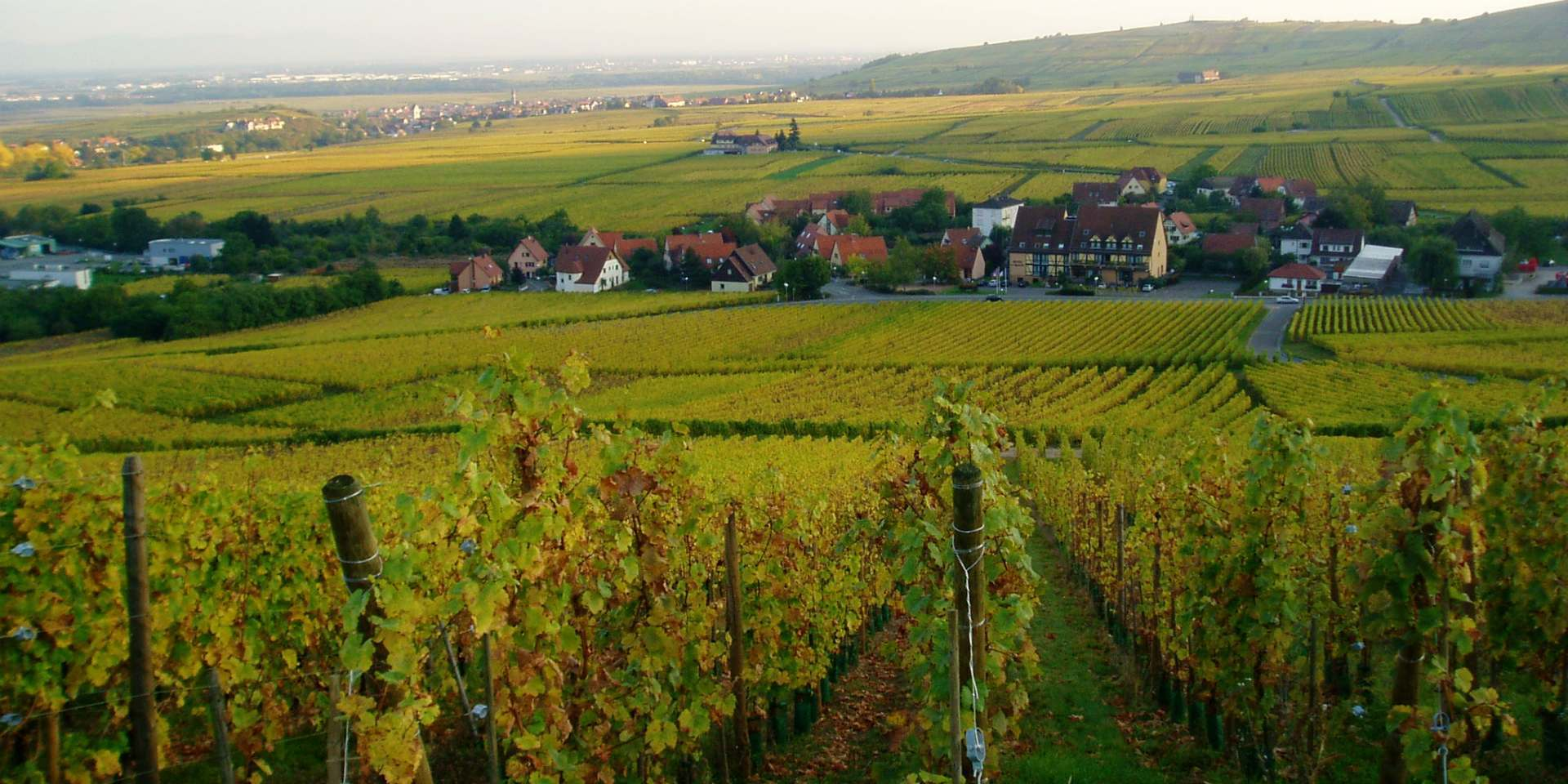 Domaine Trapet Alsace