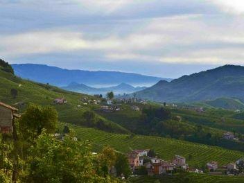 Azienda Agricola le Colture, buy wine from Italy, buy wine from Veneto, buy Italian wine