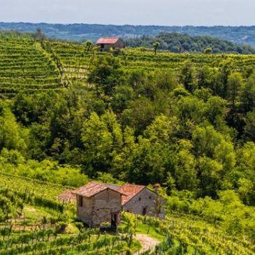Producer spotlight: Le Colture, buy italian wine
