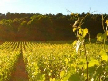 Domaine François Carillon, buy wine from france, buy wine from burgundy, buy french wine