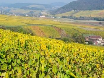Domaines Leflaive, buy wine from france, buy frenhc wine, buy wine from burgundy