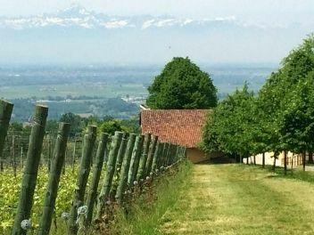 Giulia Negri, buy wine from Italy, buy wine from Piedmont, buy Italian wine