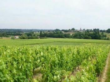 L'Aurage, buy wine from france, buy french wine, buy wine from bordeaux