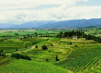 Vignobles Gonnet, buy wine from france, buy french wine, buy wine from rhone