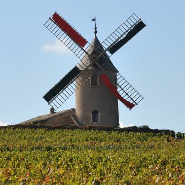 Burgundy 2019 Vintage Report