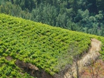 Massoc Frères, buy wine from chile, buy chilean wine