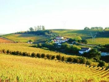 Quinta de Chocapalha, buy wine from portugal, buy portuguese wine