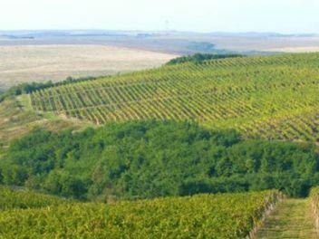 Recas Cramele, buy wine from romania, buy romanian wine, buy wine from east europe