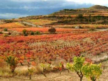 Bodegas Zugober, Buy wine from spain, buy spanish wine, buy wine from rioja