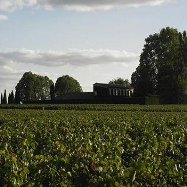Bordeaux wine 2020 Vintage