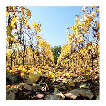 maconnais wine