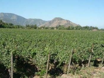 Viña Nahuel, buy wine from chile, buy chilean wine